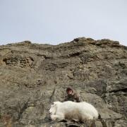 Goat Hunt4 (Medium)
