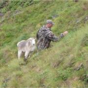 SheepHunt2010186-1