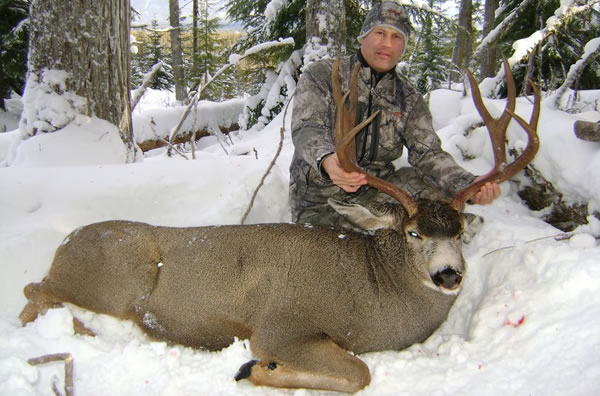 Mule Deer Hunting Guide Outfitter in BC